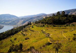 The Best Vineyards and Wineries to visit in Portugal